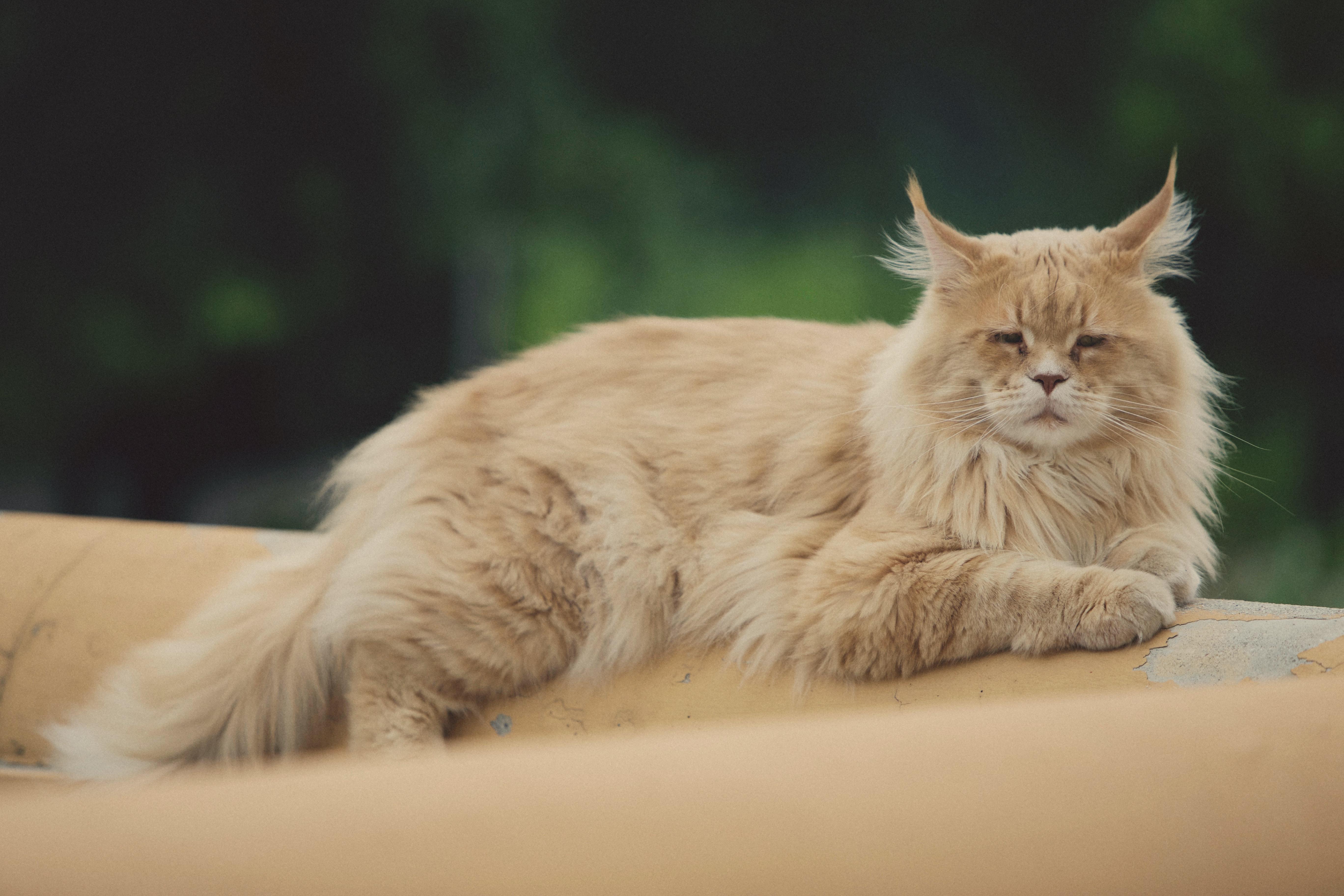 un chat se repose