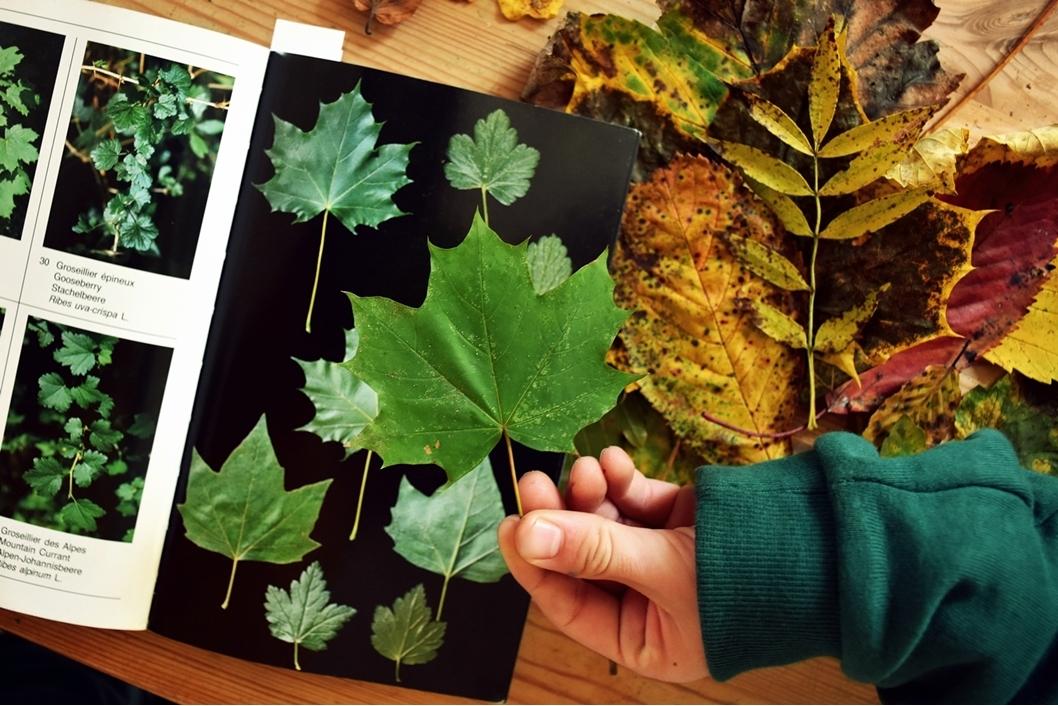 Elsa, maman fait des activités avec des feuilles en compagnie de ses enfants